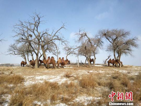 """内蒙古政协委员为环境""""后遗症""""持续发声"""
