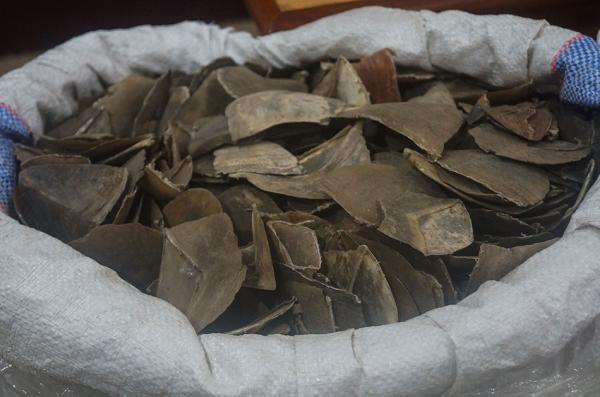 东北林大回应获移交11.9吨穿山甲鳞片:仅代管一百多公斤