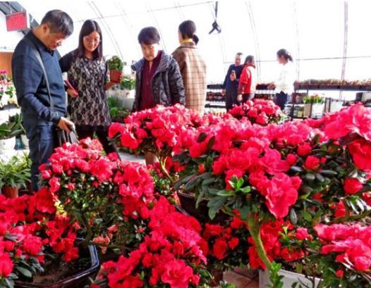 新疆哈密:蔬菜花卉上市 农业园里春意浓