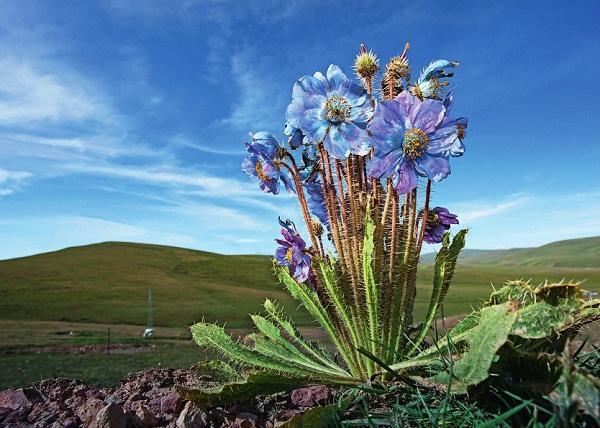 尊享富鑫源星海:这些花可能你一辈子都没见过
