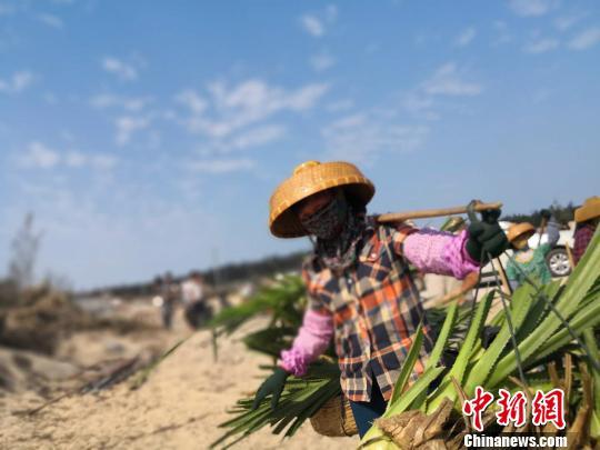 """绿色娘子军领头人陶凤交:在沙丘筑起""""绿色长城"""""""