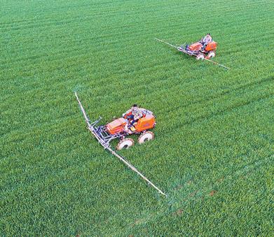 保护冬小麦