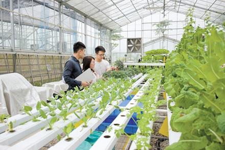 """香港90后青年来江门市研究""""鱼菜共生""""生态循环种植技术"""