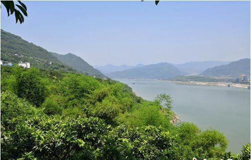 重庆云阳:发展特色经济林 生态富民两不误