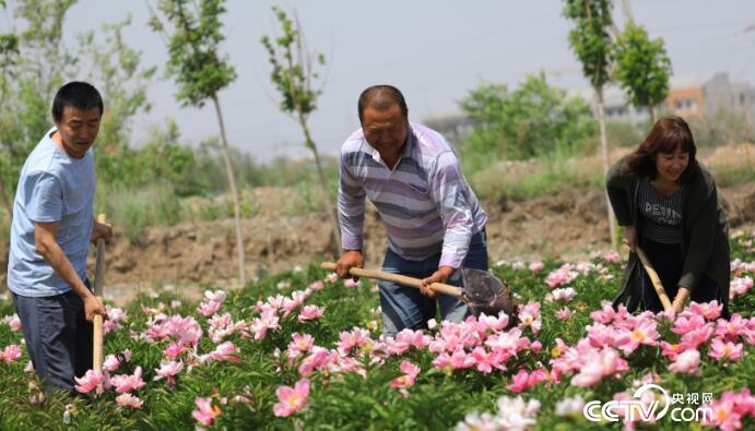 """新疆呼图壁县:""""花卉经济""""助力乡村振兴"""