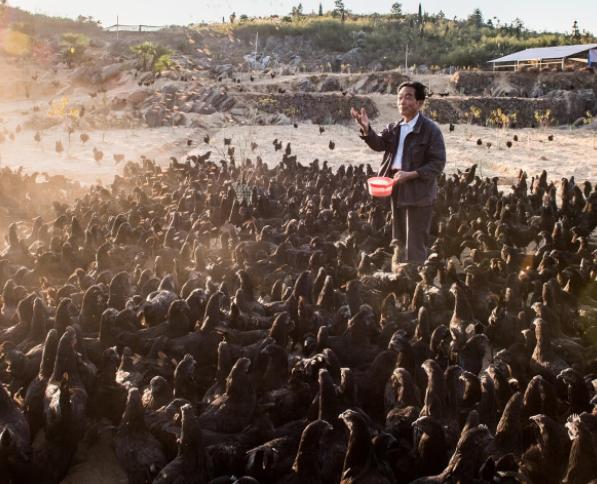 亿万富翁在石头山二次创业 每天挑粪担水喂猪养鸡