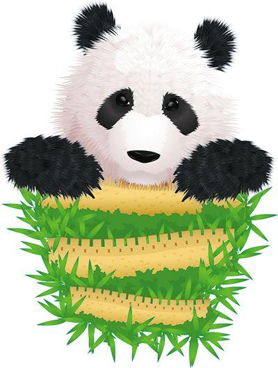 """大熊猫的""""快乐老家"""""""