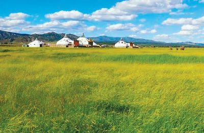 用中国智慧修复大草原