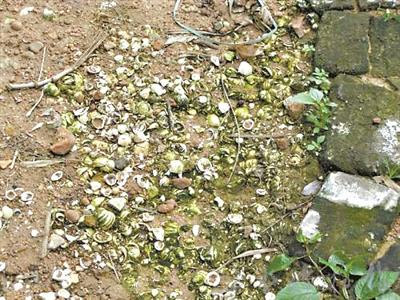 残余贝壳垃圾被人类遗弃在遗址周围。