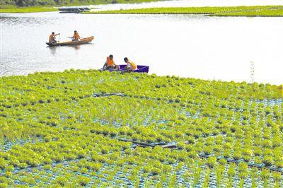 土壤污染防治法:让群众住得安心、吃得放心