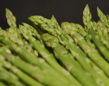 门外汉变种植能手 芦笋带来千万收入