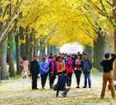 2018年第六届地坛金秋银杏文化节开幕