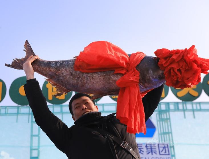 """新疆博斯腾湖46斤""""鱼王""""拍出新年好彩头"""